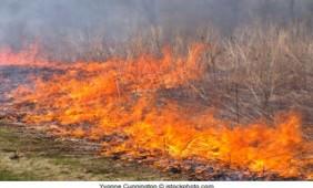queimadas-2