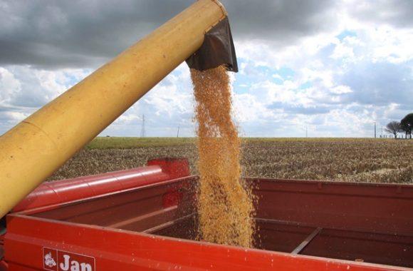 Cinco regiões de Mato Grosso concluem colheita de milho