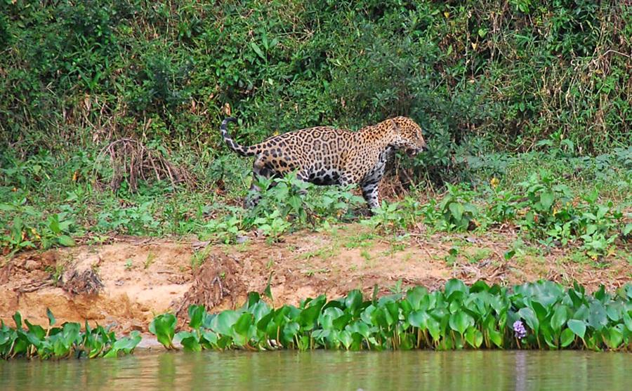 Imagem: Pantanal