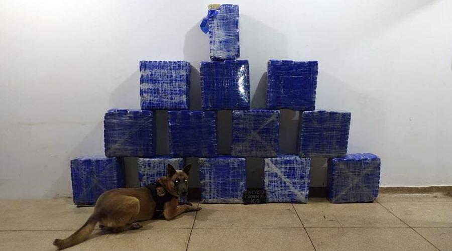 Imagem: Droga apreendida pela equipe da PRF Operação apreende 513 kg de cocaína em Rondonópolis