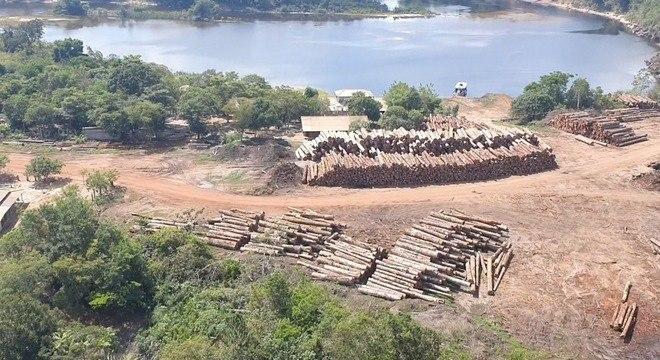 Imagem: apreensao de madeira PF faz a maior apreensão de madeira nativa da história no país
