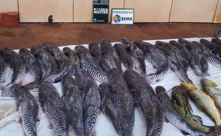 Imagem: pescado Polícia Ambiental apreende mais de 100kg de pescado irregular