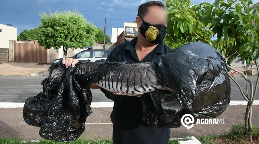 Imagem: Pescado apreendido Homem se envolve em acidente de trânsito e acaba preso com pescado irregular