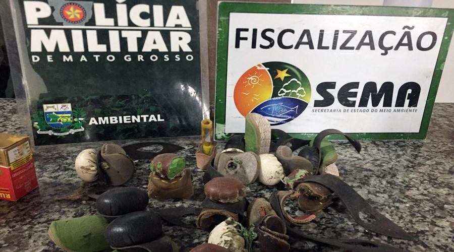 Imagem: Apetrechos para briga de galos Polícia resgata 8 galos de rinha em Rondonópolis