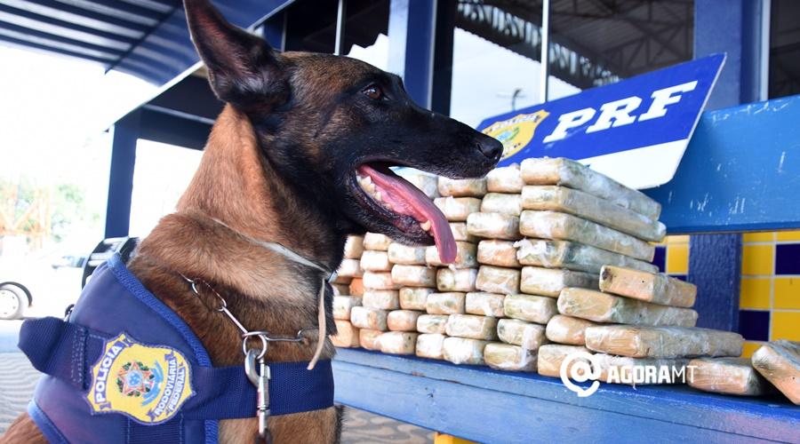 Imagem: Cao localiza droga em veiculo na Br 364 PRF apreende quase 70kg de droga escondida em veículo de passeio
