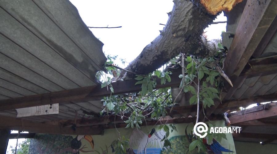 Imagem: arvore cai casa Árvore de grande porte cai durante chuva e destrói casa
