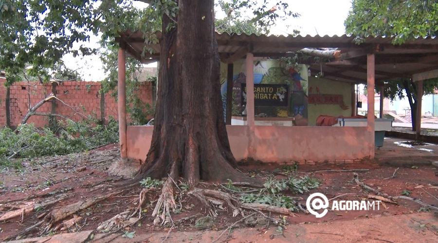 Imagem: arvore caida Árvore de grande porte cai durante chuva e destrói casa