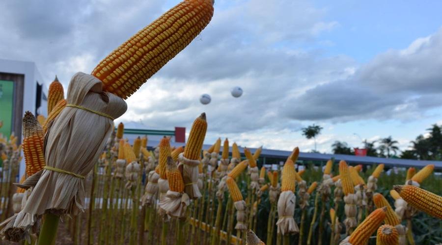 Imagem: e Programa Crédito Rural financia agropecuária com R$ 1,7 bilhão