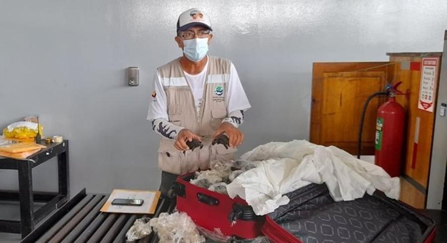 Imagem: 07 3 Mala com 185 tartarugas recém-nascidas é descoberta no aeroporto