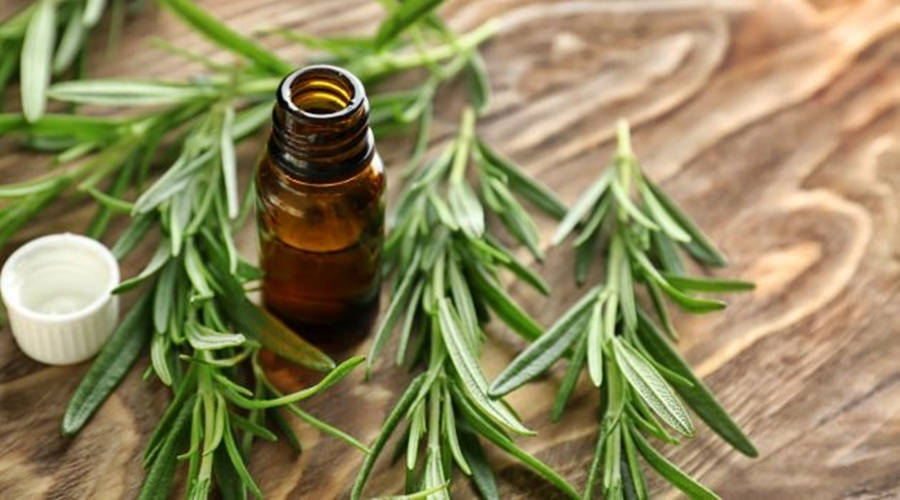 Imagem: ALECRIM 5 receitas caseiras para queda de cabelo