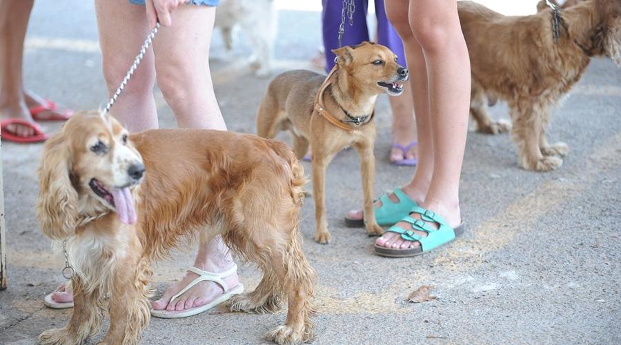 Imagem: agencia brasil150912pzb 9156 Rússia produz primeiro lote de vacina contra covid-19 para animais
