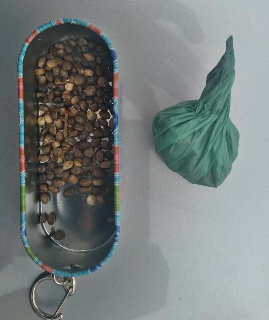 Imagem: ea4d67c0 2ff4 4fce 90c7 0df84461b9b1 Polícia apreende sementes de maconha durante abordagem em veículo
