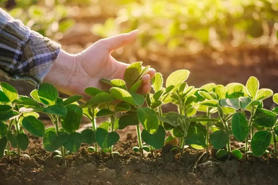 Imagem: Plantacao Governo libera neste ano R$ 693 Mi para o Programa de Seguro Rural
