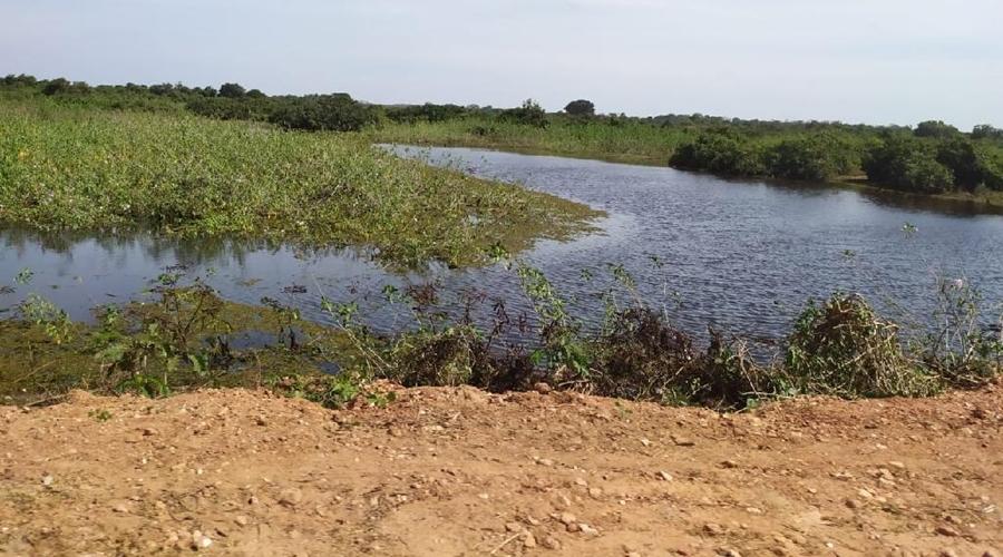 Imagem: Transpantaneira apos limpeza das margens Estado promove limpeza na Transpantaneira para evitar incêndios no Pantanal