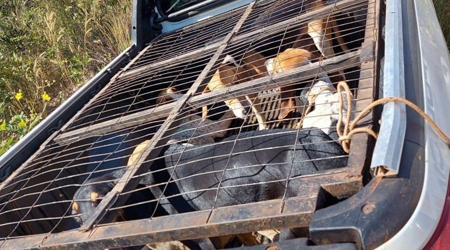 Imagem: a36a5d72 e0ef 47c2 8c55 1132ac5a202e Polícia apreende armas e encontra cachorros em gaiola