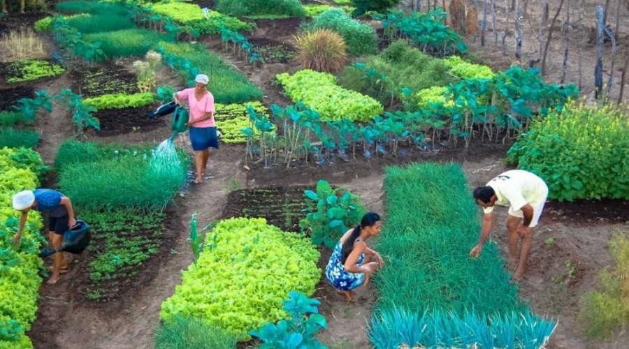 Imagem: agroecologia Agroecologia terá semana comemorativa em Mato Grosso
