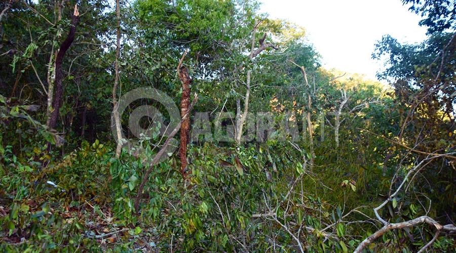 Imagem: Arvores quebradas com o acidente Queda de avião mata quatro pessoas e assusta moradores da Rodovia do Peixe
