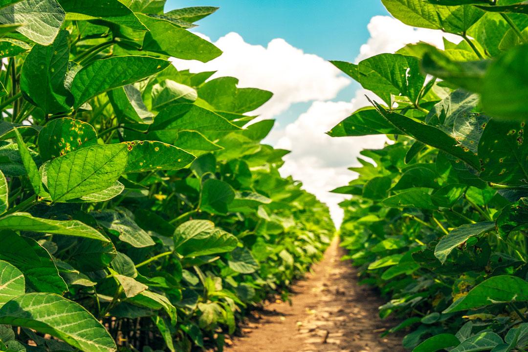 Imagem: Capa materia sell Adjuvantes agrícolas geram economia para o produtor e diminuem danos ao meio ambiente