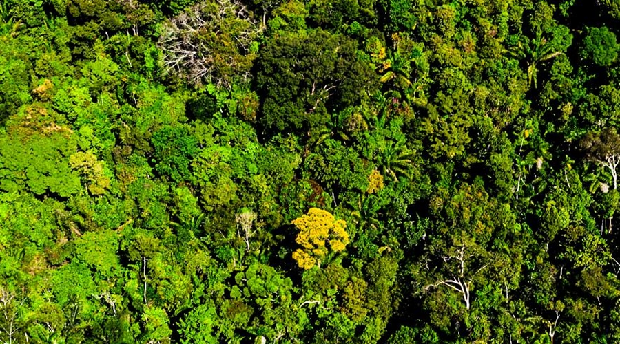 Imagem: floresta MEV6351 floresta MT possui 5,5 milhões de hectares de áreas em regeneração