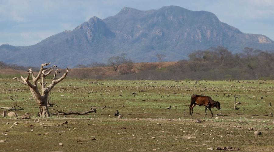 Imagem: 2021 07 02t130321z 1299016617 rc2abo9bldto rtrmadp 3 mexico weather drought México sofre com falta d'água; produção agrícola é ameaçada