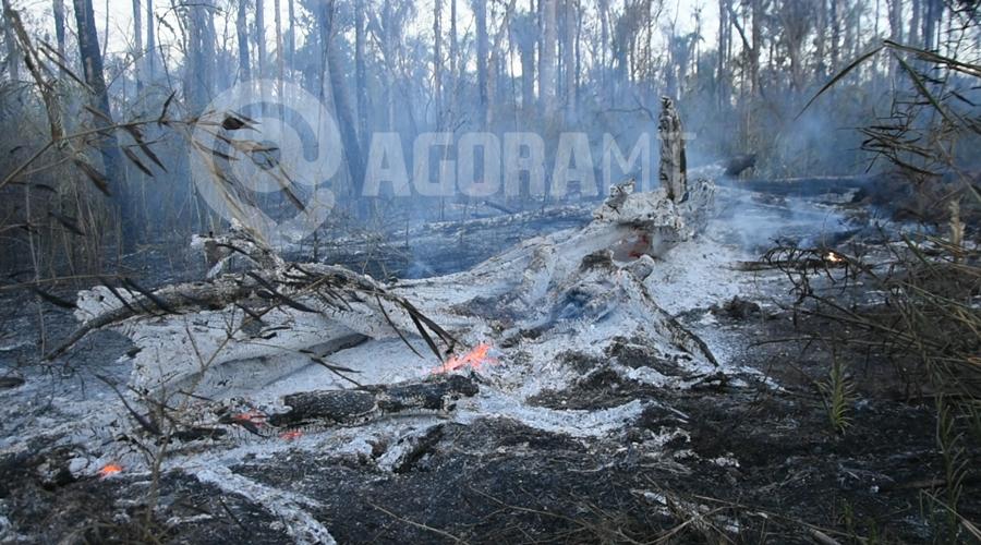 Imagem: Arvore totalmente queimada Incêndio atinge aldeia e fogo é controlado com ajuda dos índios