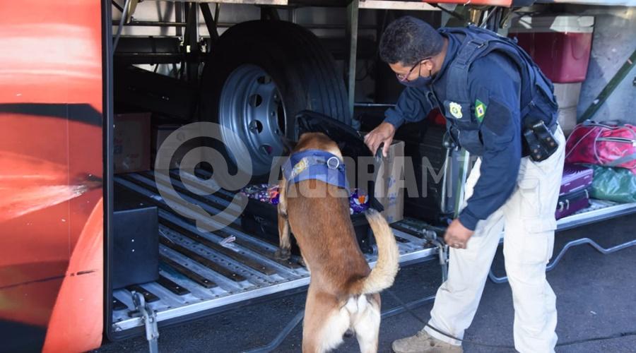 Imagem: Cao encontrando a droga Skunk Durante Fiscalização PRF apreende 9 Kg de Skunk em Rondonópolis