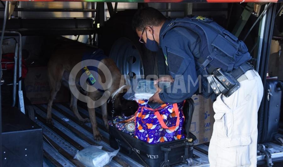 Imagem: Cao farejando a droga Durante Fiscalização PRF apreende 9 Kg de Skunk em Rondonópolis
