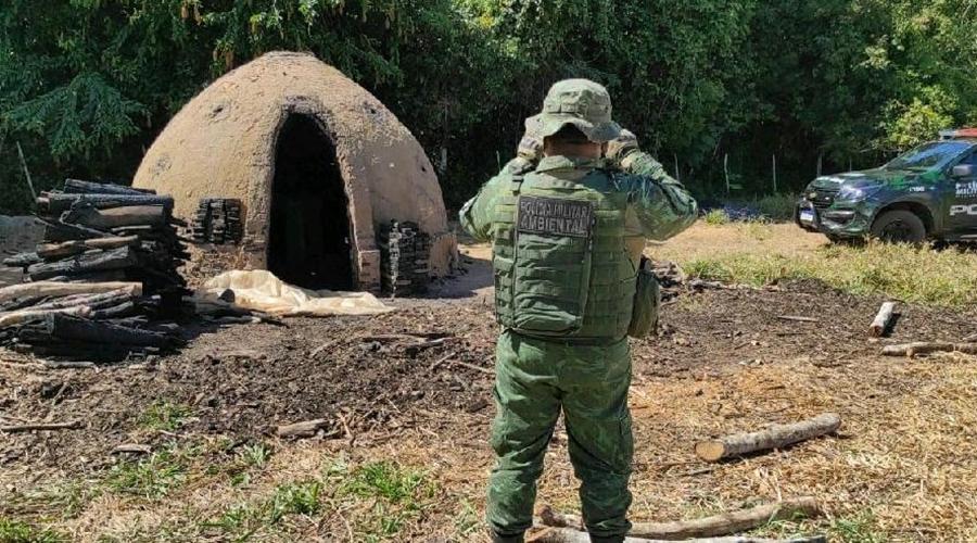 Imagem: ambiental Polícia fecha carvoaria clandestina e prende homem por crime ambiental