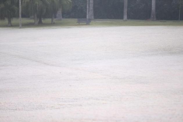 Imagem: geada no jardim botanico em sao paulo Entenda as diferenças entre neve, chuva congelada, sincelo e geada