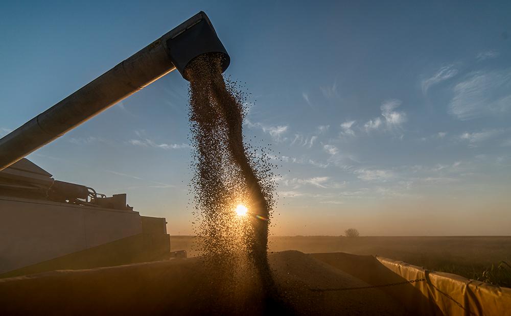 Imagem: Imagem Principal branded 2 Cidades que trabalham com a cultura da soja serão motores de aceleração na retomada da economia brasileira