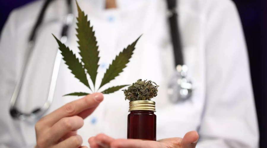 Imagem: maconha medicina CCJ aprova entrega de medicamentos com canabidiol pelo SUS