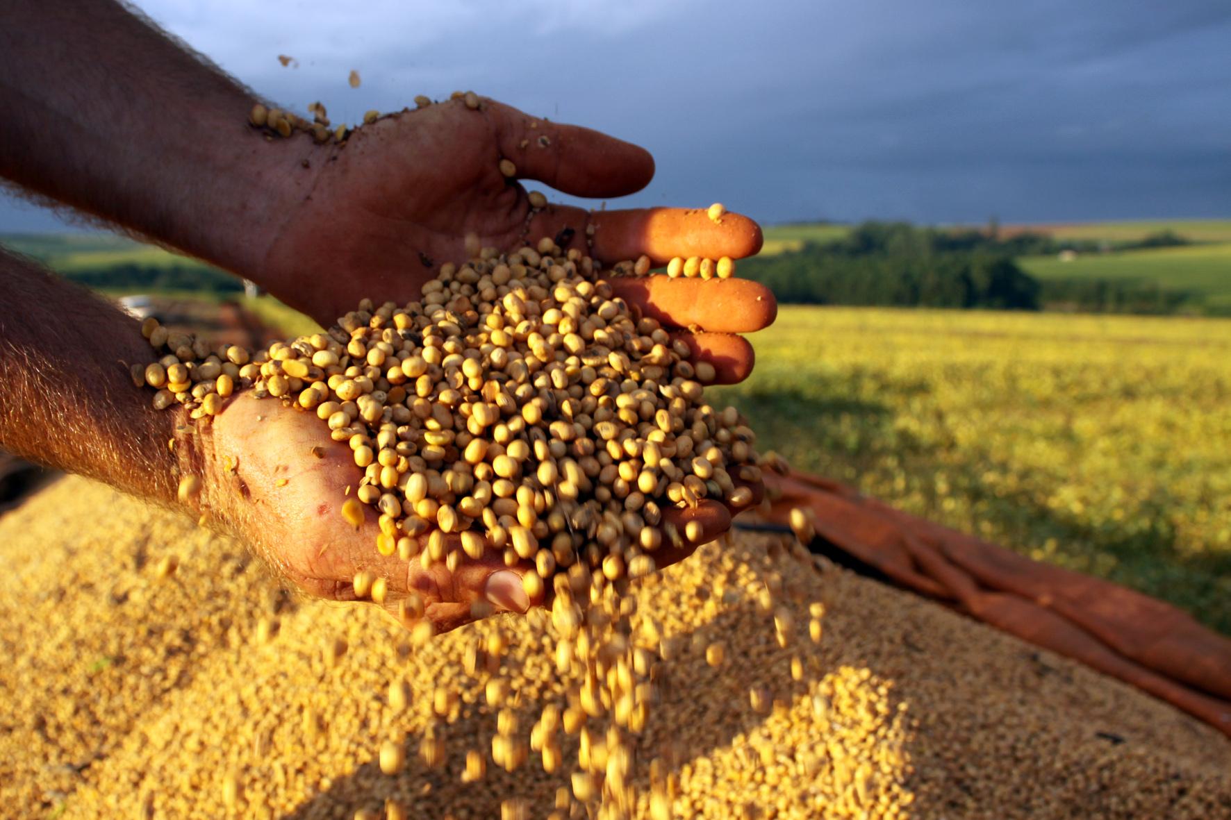 Imagem: soja Exportação de produtos agrícolas aumentam somado ao uso de bons adjuvantes