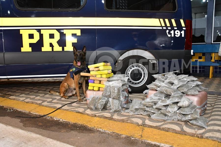 Imagem: Cao farejador junto adroga apreendida PRF aperta fiscalização e apreende mais de 30 quilos de droga e inseticida falsificado