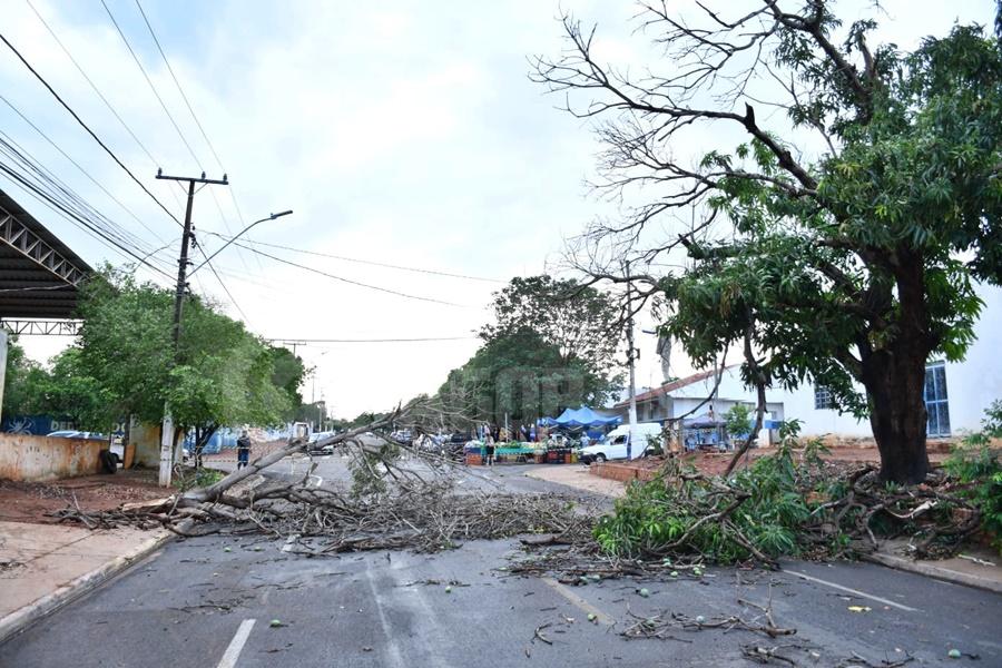 Imagem: arvores caidas Ventos fortes derrubam postes, árvores e parte da estrutura da Central da Vacinação em Rondonópolis