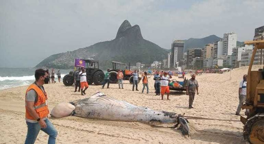 Imagem: baleia 1 Navio-petroleiro atraca em porto com baleia morta presa à proa