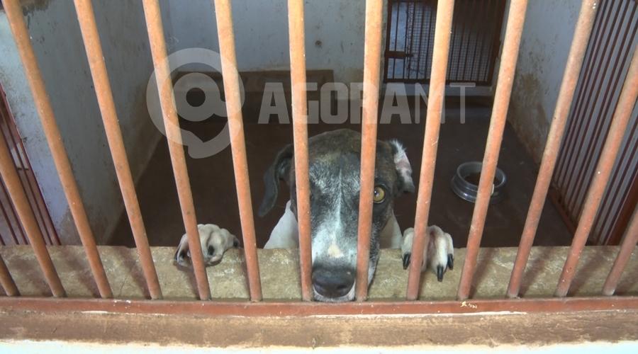 Imagem: cachorro 1 Centro Zoonoses lança campanha de adoção de animais em Rondonópolis