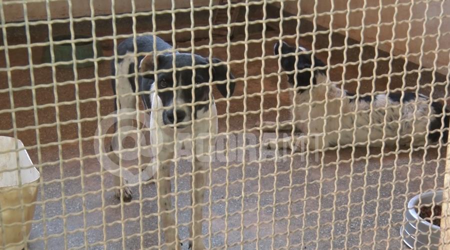 Imagem: cachorro 2 Centro Zoonoses lança campanha de adoção de animais em Rondonópolis