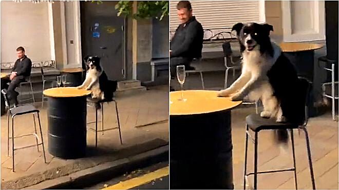 Imagem: cachorro 4 Cachorro é filmado sentado em mesa de bar aguardando ser servido