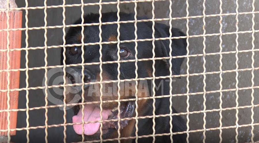 Imagem: cats Cães adestrados são alugados para segurança de residências e comércio