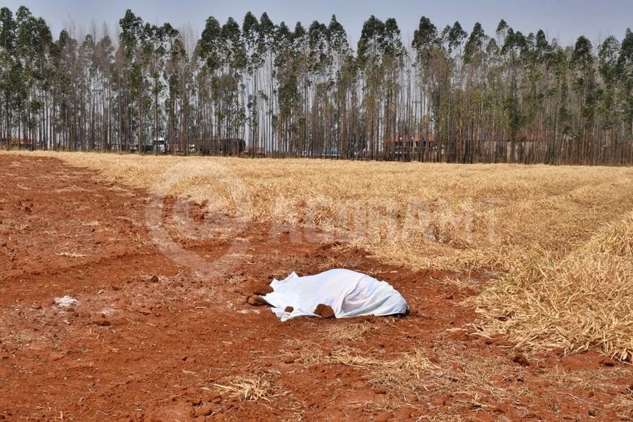 Imagem: corpo encontrado 1 Corpo é encontrado em área de plantação na BR-163 em Rondonópolis