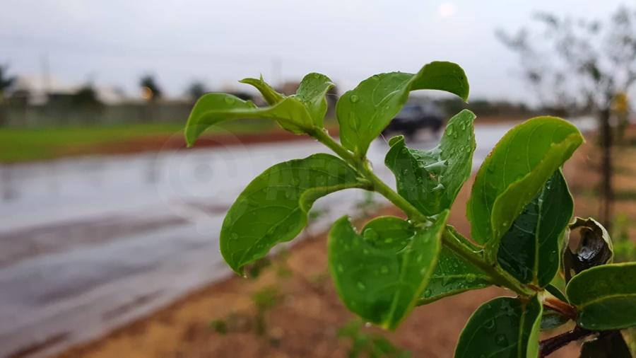 Imagem: planta molhada pela chuva Ventos fortes trazem pancadas de chuva isoladas em Rondonópolis
