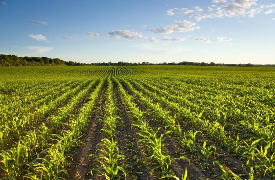 Imagem: Ultilizacao de Decreto estabelece novas regras para o registro e pesquisa de agrotóxicos